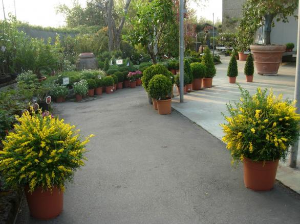 Това са растения и цъфтящи храсти за